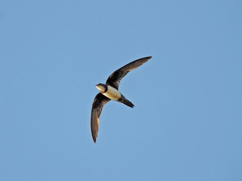 Image 3 - Swift Birding Trail
