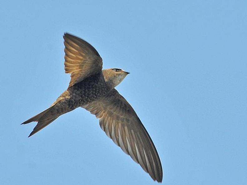 Image 2 - Swift Birding Trail