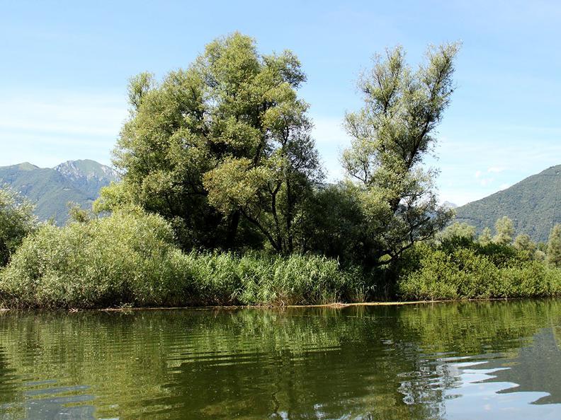 Image 1 - Excursion en bateau des Bolle di Magadino