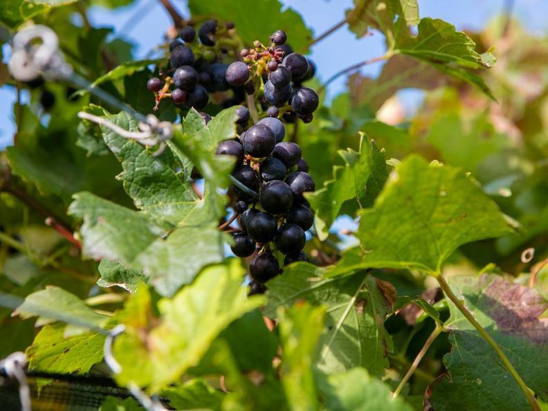 Image 4 - Visite de cave et dégustation de vin