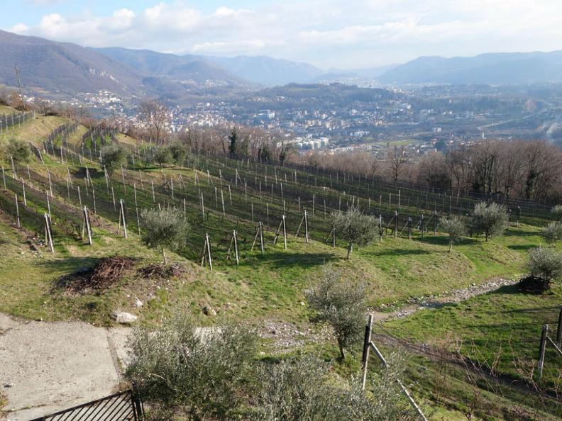 Image 4 - Cantine Latini SA - Azienda viticola