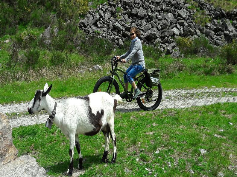 Image 2 - Spot E-bikes & more Sonogno
