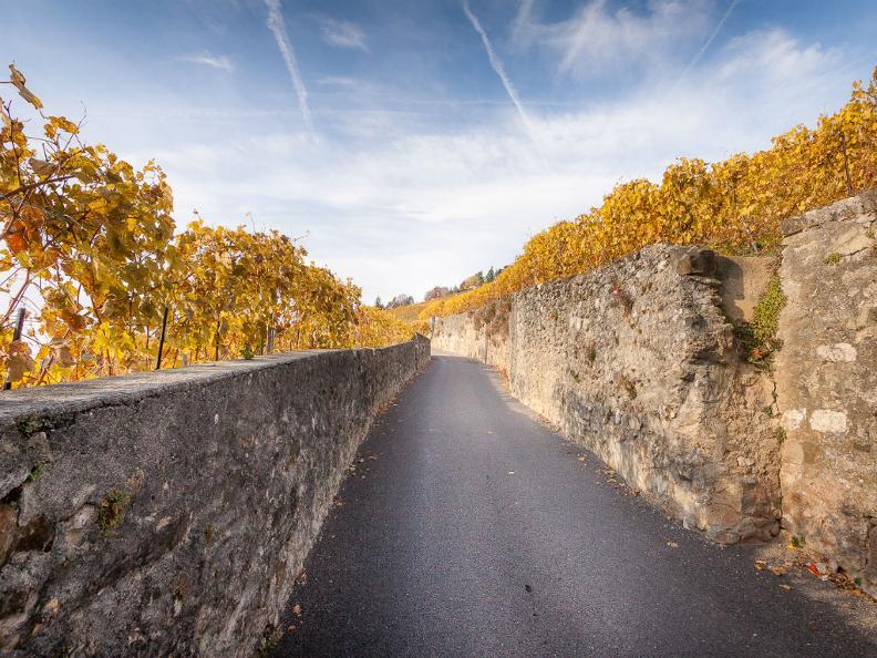 Image 1 - La Via di Bacco