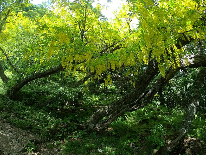 Image 7 - Waldreservat Bosco Sacro di Mergugno