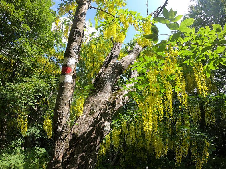 Image 9 - Bosco Sacro di Mergugno Forest Reserve