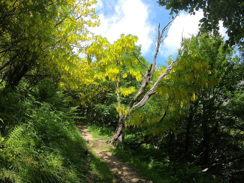 Image 10 - Waldreservat Bosco Sacro di Mergugno