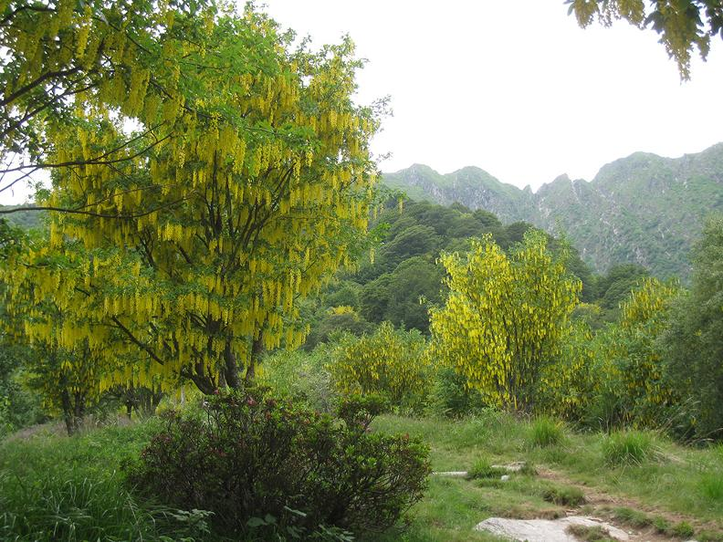 Image 1 - Waldreservat Bosco Sacro di Mergugno