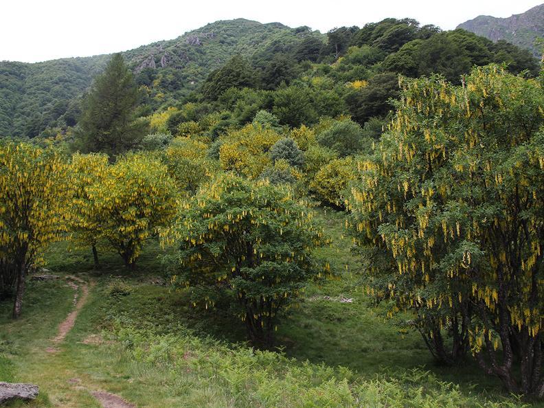 Image 2 - Waldreservat Bosco Sacro di Mergugno