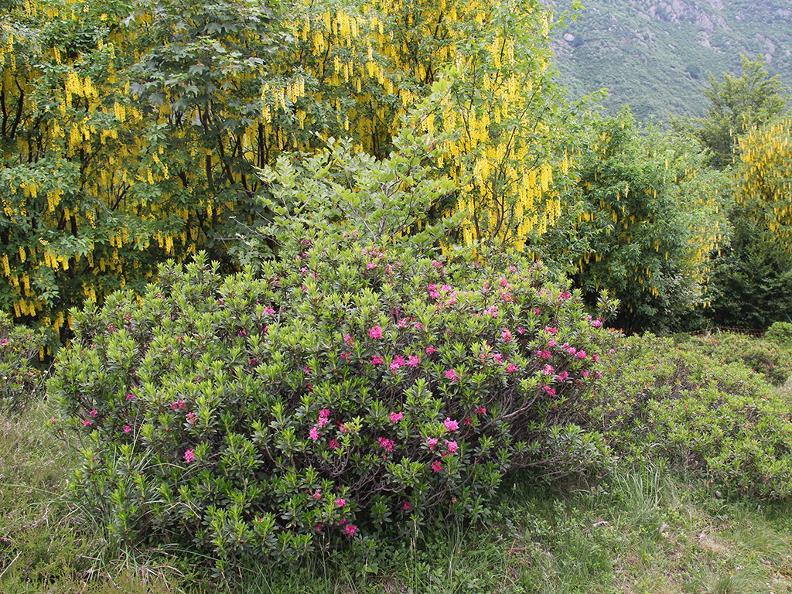 Image 3 - Waldreservat Bosco Sacro di Mergugno