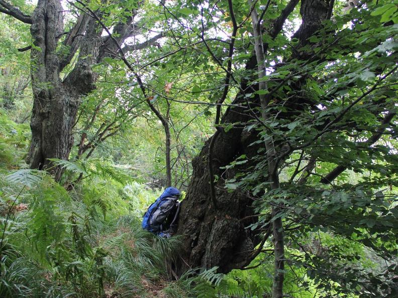 Image 5 - Waldreservat Bosco Sacro di Mergugno