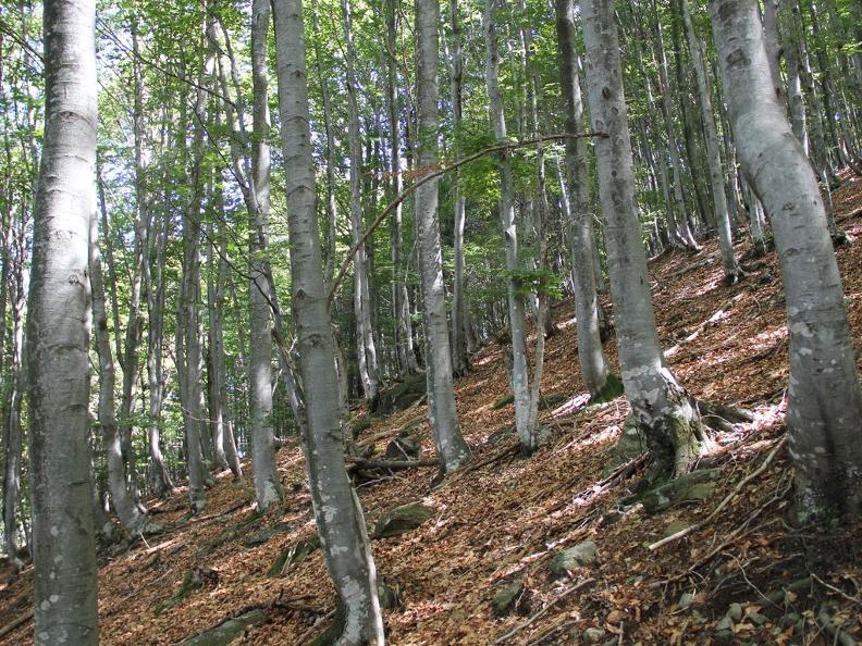 Image 1 - Réserve forestière Palagnedra