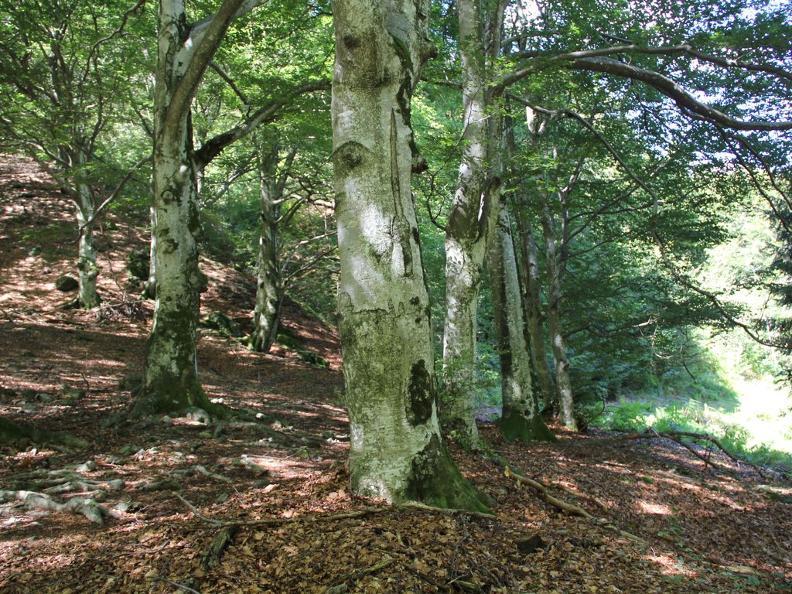 Image 0 - Réserve forestière Palagnedra