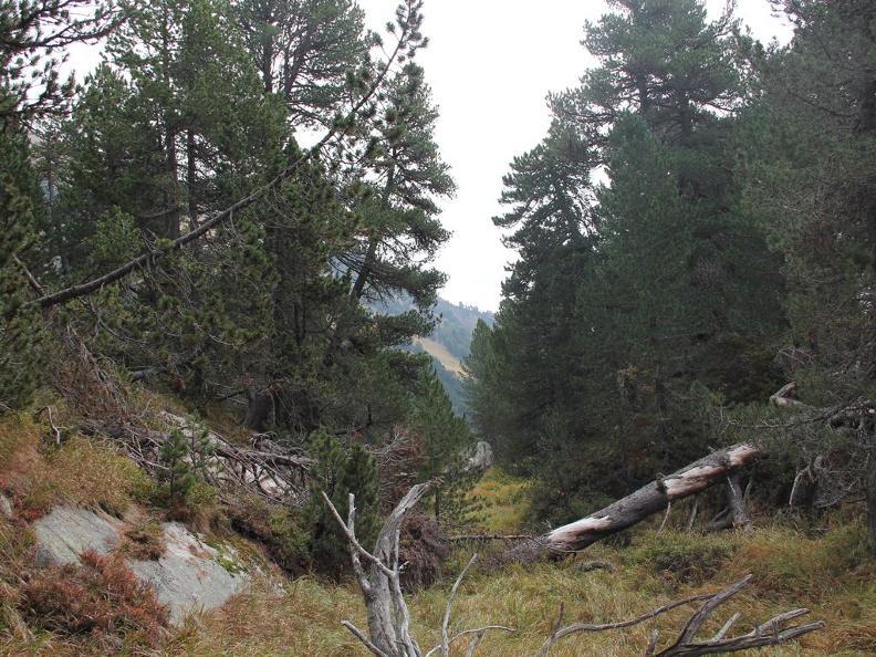 Image 3 - Waldreservat Selvasecca