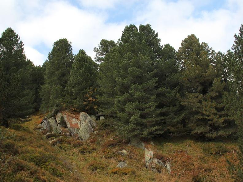 Image 4 - Selvasecca Forest Reserve