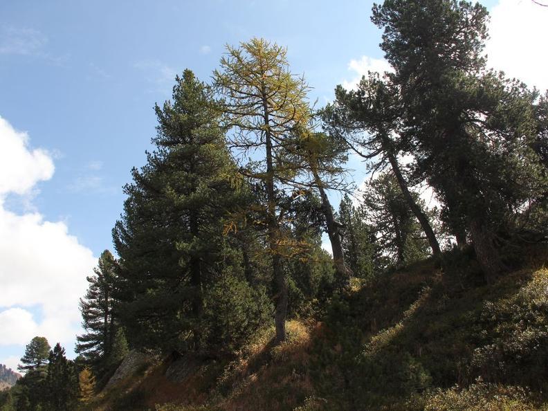 Image 6 - Waldreservat Selvasecca