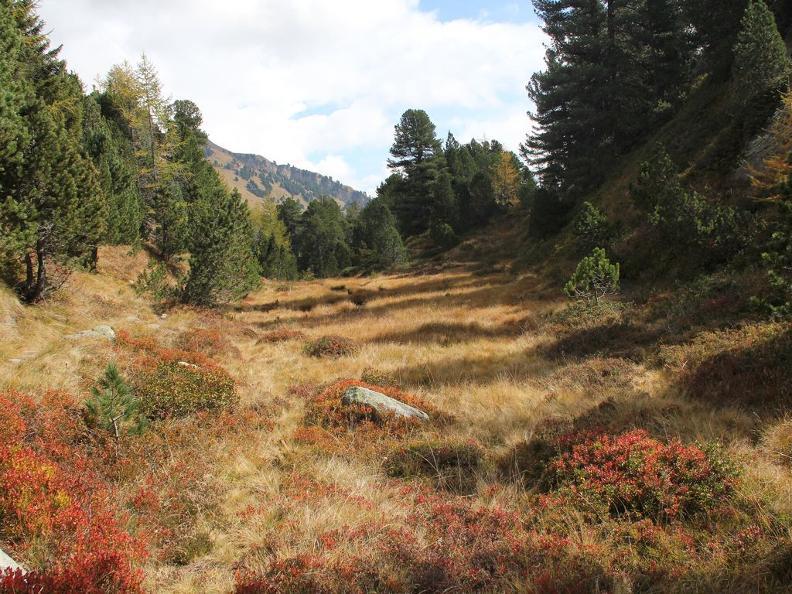Image 1 - Waldreservat Selvasecca