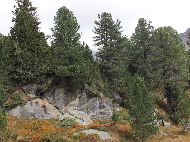 Image 5 - Waldreservat Selvasecca