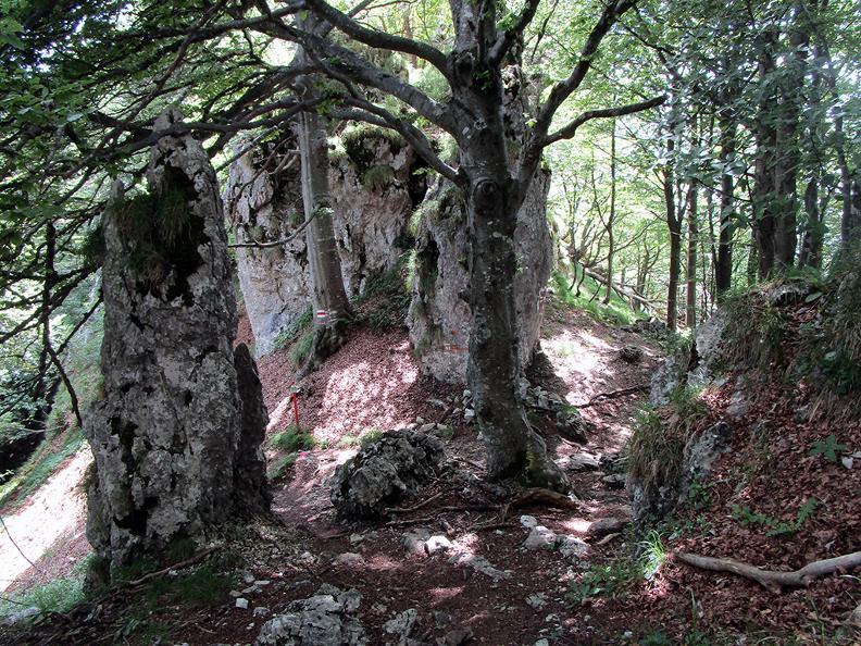 Image 11 - Réserve forestière Denti della Vecchia