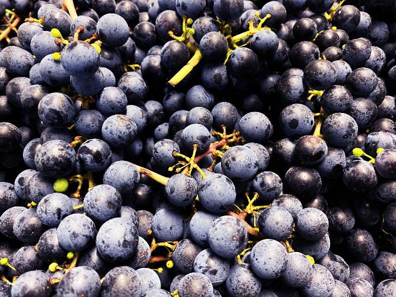 Image 6 - Wine cellar Settemaggio