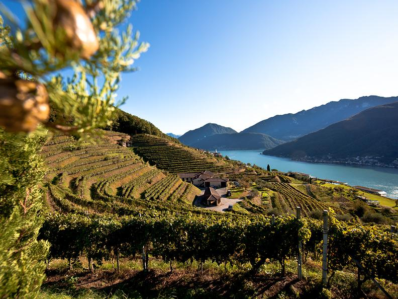Image 3 - Wine and Gourmet Tour