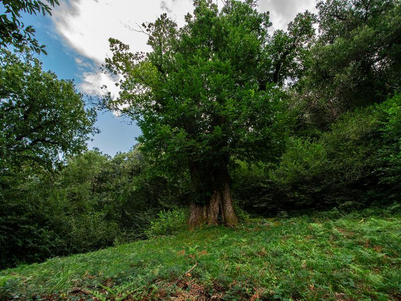 Image 0 - Robasacco Chestnut Woods