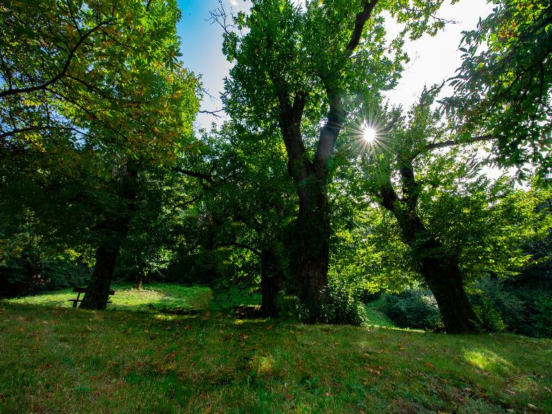 Image 2 - Robasacco Chestnut Woods