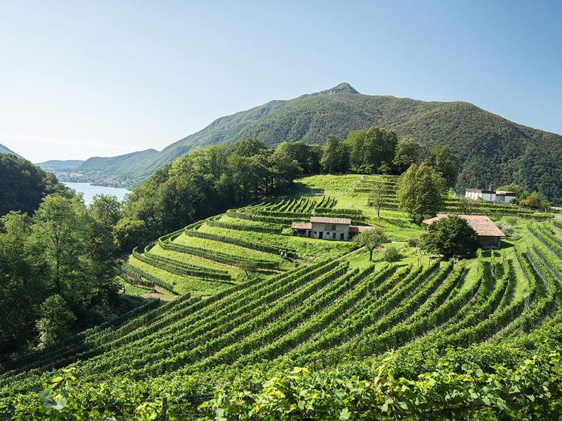 Image 1 - Sleeping in the Ticino vineyards