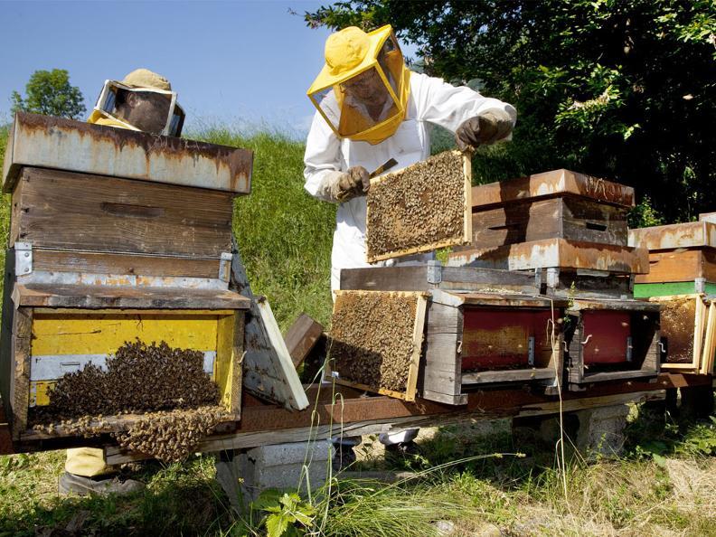 Image 0 - Visita e degustazione di miele all'apiario