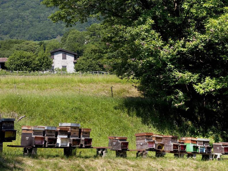 Image 3 - Visita e degustazione di miele all'apiario
