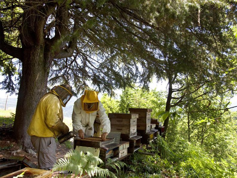 Image 4 - Visita e degustazione di miele all'apiario