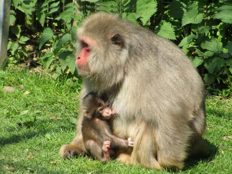 Image 1 - Zoo Al Maglio