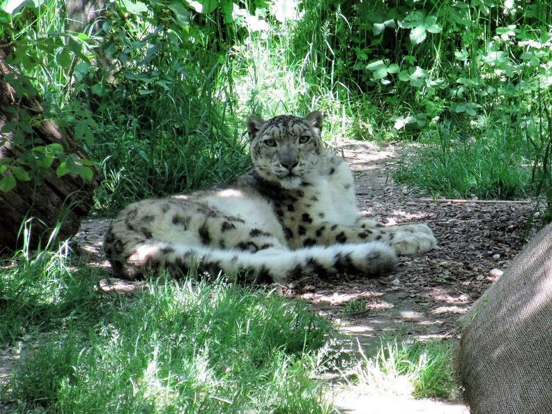 Image 5 - Zoo Al Maglio