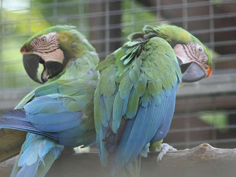 Image 0 - Zoo Al Maglio