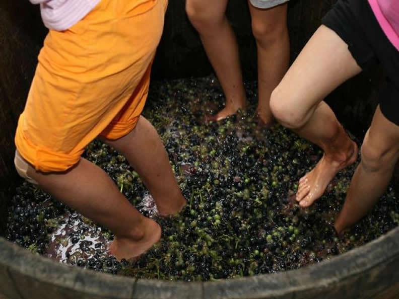 Image 2 - Sagra dell'uva