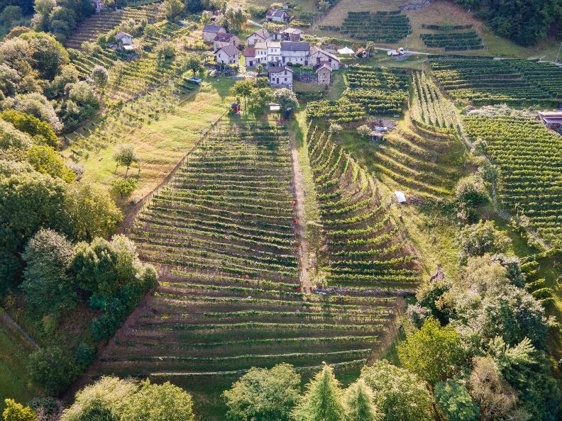 Image 3 - Cagi - Cantina Giubiasco SA