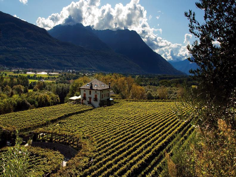 Image 4 - Vini & Distillati Angelo Delea SA