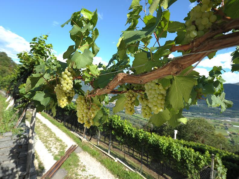 Image 2 - Chiericati vins