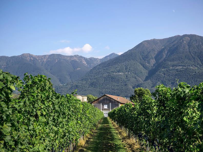 Image 4 - Terreni alla Maggia SA