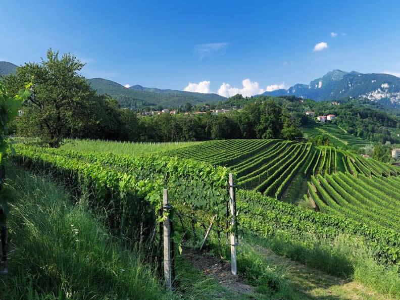 Image 1 - Der Tessiner Weinbau