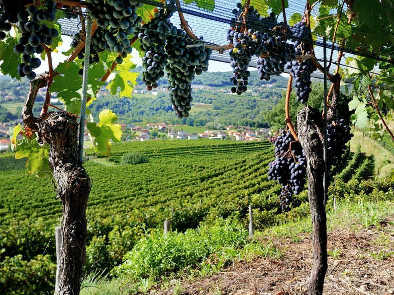 Image 0 - Merlot del Ticino ed altri vitigni
