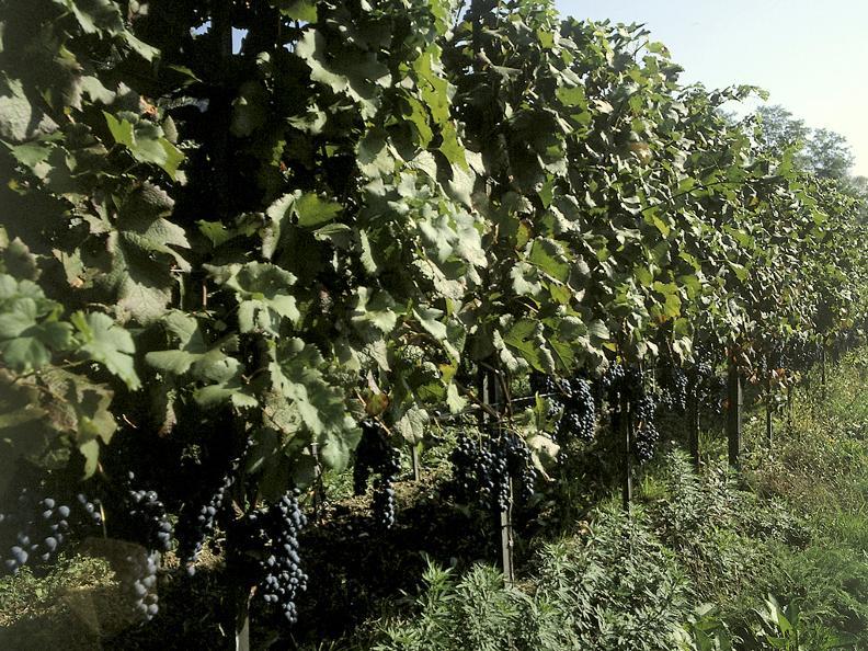Image 0 - Wine cellar Böscior