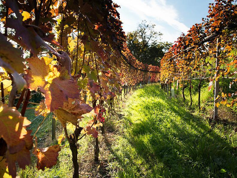 Image 0 - Wine cellar Ferrari Roberto & Andrea