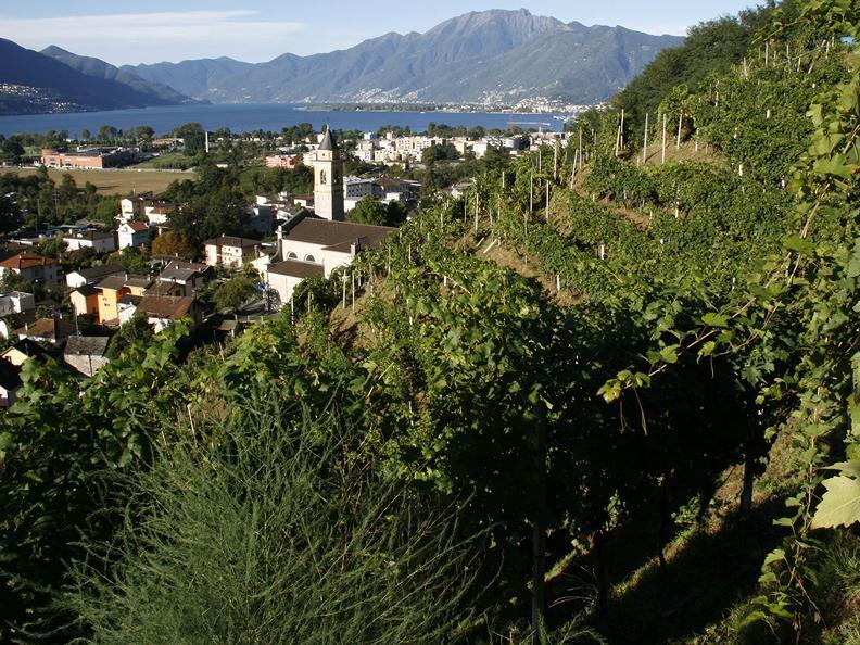 """Image 0 - Wine cellar """"La Segrisola"""""""