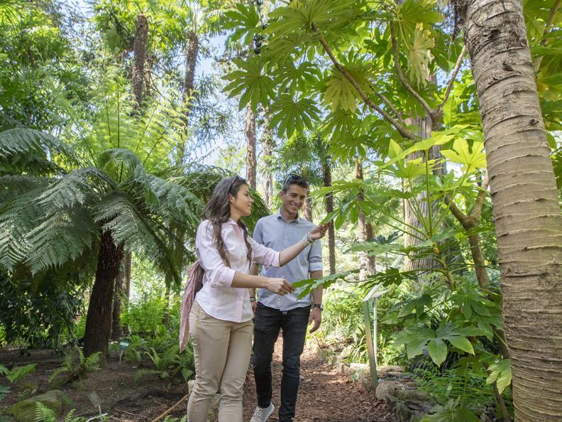 Image 0 - Isole di Brissago – Giardino Botanico