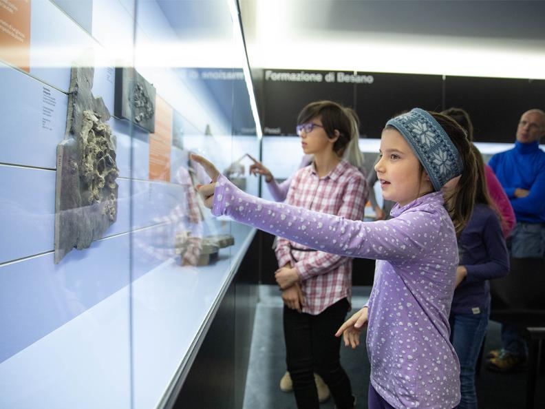 Image 5 - Musée des fossiles du Monte San Giorgio