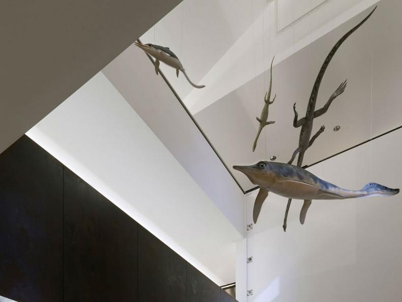 Image 2 - Museo dei Fossili del Monte San Giorgio