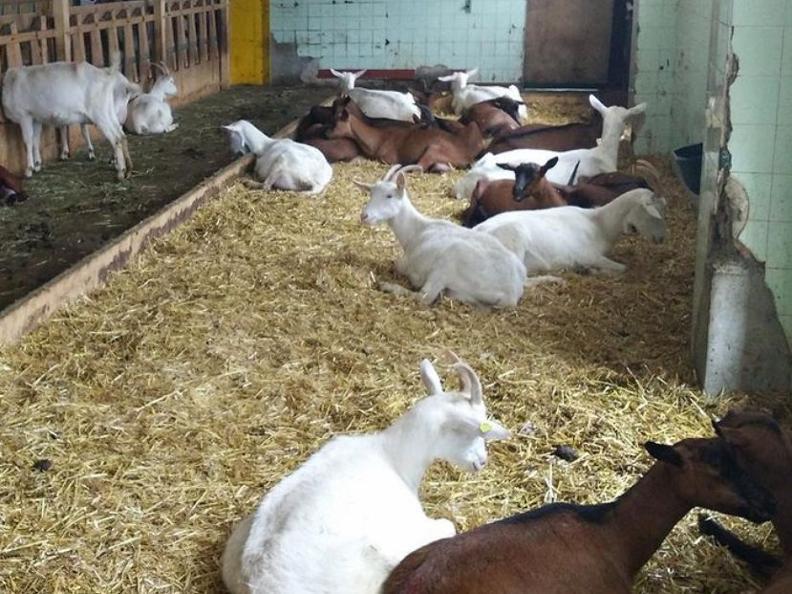 Image 0 - Colazione in fattoria!
