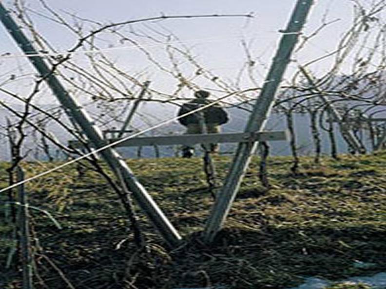Image 0 - Der Weinbau im Tessin