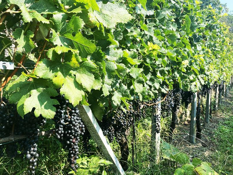 Image 12 - Azienda vinicola Mondò