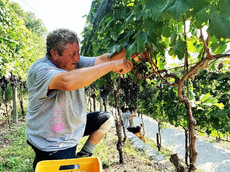 Image 9 - Azienda vinicola Mondò